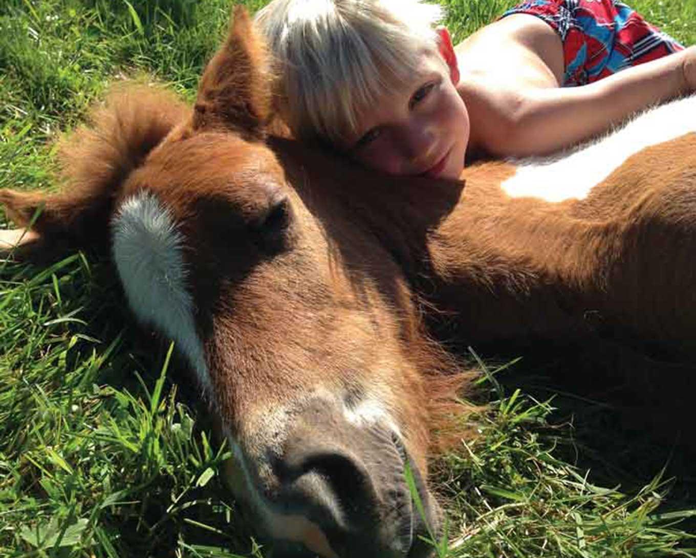 Skredderviken Icelandic Horses
